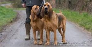 Perros grandes 1