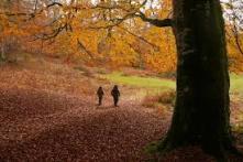 otono-bosque-pareja