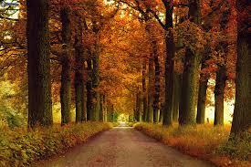 otono-paisaje-bosque-1