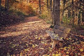 Pafque otoño 1