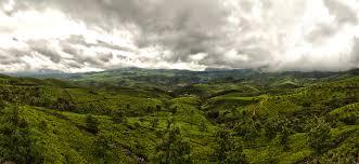 Campos de té y nubes