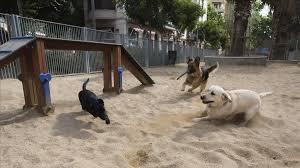 Perros parque 5